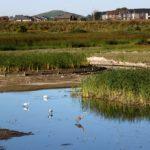 Carp River Restoration Project Study