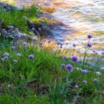 Big Rideau Lake Association - Our lake. Our legacy.
