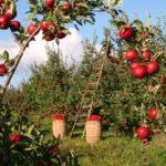 Eastern Ontario Agri-Food Network