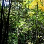 The Boucher Forest - Protect wildlife, biodiversity, and the forest