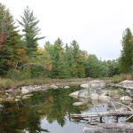 Bonnechere River Watershed Nature in Your Neighbourhood Guide