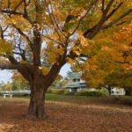 NCC Fall Rhapsody - Gatineau Park