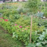 The Trailing Edge Community Garden - Come Grow with Us