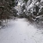 Warwick Forest Conservation Area - Trekking the Trails
