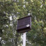 Bat House Program - Wesley Clover Parks