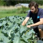 Ottawa's Urban Farming leverages appetite for locally grown food