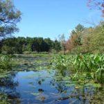 Britannia Conservation Area (Mud Lake)