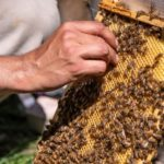 Hands-On Natural Beekeeping Program