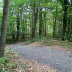 Carp Hills Forest - Various Trails