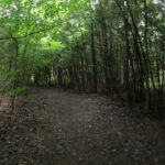 A North Grenville Nature Trail to Discover - Ferguson Forest Centre