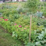 Trailing Edge Community Garden - Come Grow with Us in Kanata North