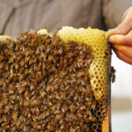 Fairmont Bee Sustainable Program