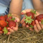 Get Fresh - Visit a Farm