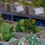 Prescott-Russell Greenlights 'food hub'