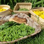 Ottawa Foraging: Wild Plant and Mushroom Walks