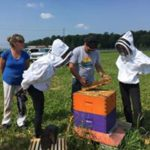 Ottawa's Community Supported Pollination Project
