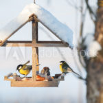 Lanark Highlands Christmas Bird Count 2018