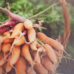 Heartbeet Farm - Watch Us Grow