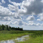Hutton Creek Marsh Restoration Nearing Completion