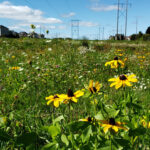 Hydro Ottawa's pollinator meadow is for the birds (and the bees)