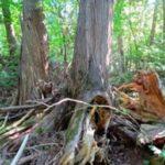 Kemp Woodland - Informal Trails