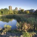 Macoun Marsh - preserving biodiversity