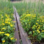 The Natural Step - Sustainable Communities Program
