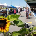 Ottawa Farmers' Market (4 Locations) - From the heart of the land to the heart of the city