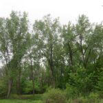 Petrie Island Tree Inventory