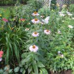 Biodiversity Event Series 2021 - Pollinator Garden Webinar