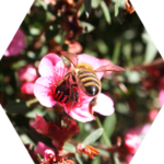 Bee Friendly Farming in Canada