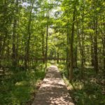 Ottawa-area Trail Where you can Socially Distance in Nature – Stony Swamp Trail