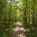 Spring on the Greenbelt's Trails - Stony Swamp
