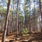 Torbolton Forest - A natural trail area within the Constance Bay Sand Hills