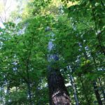 Trillium Woods - Walking Trail