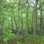 Whaleback Woodland Reserve