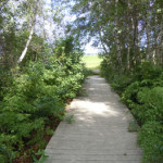 Alfred Bog Walk, Alfred, Ontario