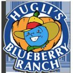Hugli's Blueberry Ranch - Eastern Ontario's Largest Blueberry Farm