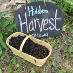 Hidden Harvest Ottawa - Trees Feeding People