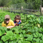 Our Community Gardens - Growing health, hope and community