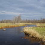 Charleston Lake Watershed Stream Restoration Projects