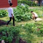 UOttawa Community Garden
