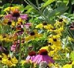 Fletcher Wildlife Garden - urban green space, rural environment, connectivity