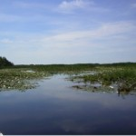 Hutton Creek Wetland - Restoring a provincially significant wetland