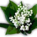 Stittsville-Goulbourn Horticultural Society, Gardening Eastern Ontario