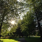 Urban Forest Management Plan - Putting Down Roots for the Future