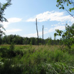 Protection of Wetlands in the Ottawa Valley, Bristol and Clarendon Quebec
