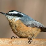 Wild Birds Unlimited - Pathways to Nature Conservation Fund